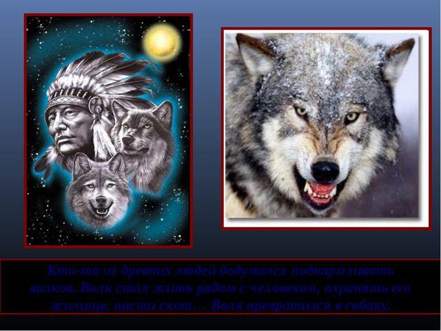 Кто-то из древних людей додумался подкармливать волков. Волк стал жить рядом...