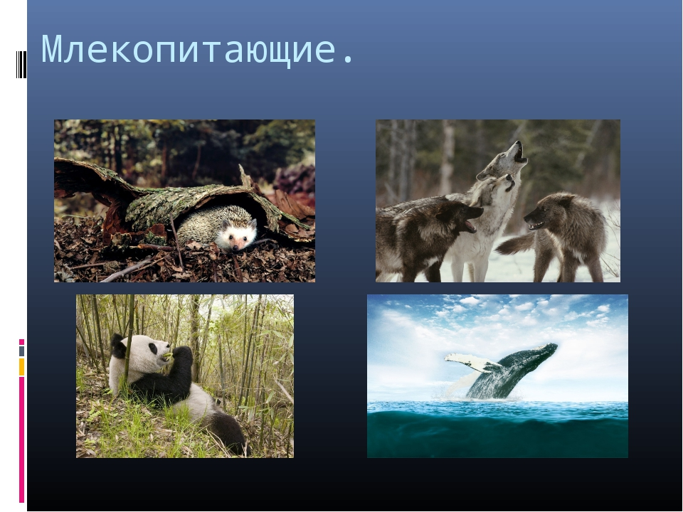 Млекопитающие.