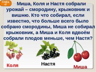 Коля Миша Настя Слайд 47 Миша, Коля и Настя собрали урожай – смородину, крыжо