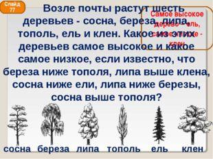 сосна береза липа тополь ель клен Самое высокое дерево – ель, самое низкое -