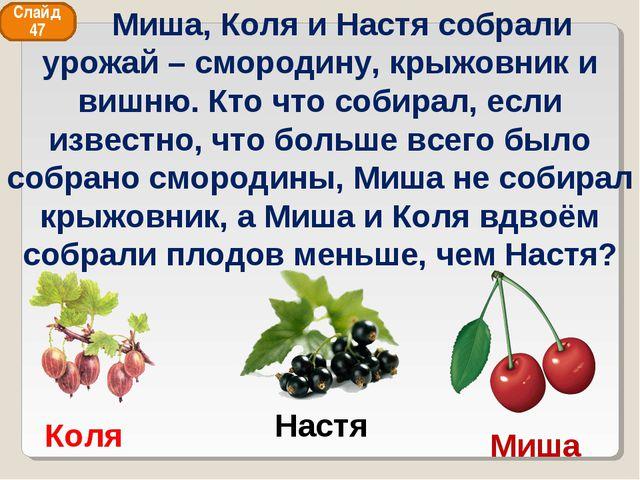 Коля Миша Настя Слайд 47 Миша, Коля и Настя собрали урожай – смородину, крыжо...