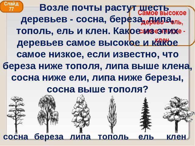 сосна береза липа тополь ель клен Самое высокое дерево – ель, самое низкое -...