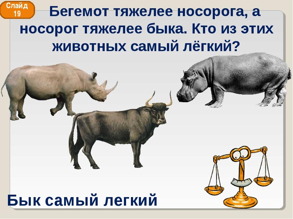 Бык самый легкий Слайд 19 Бегемот тяжелее носорога, а носорог тяжелее быка. К...