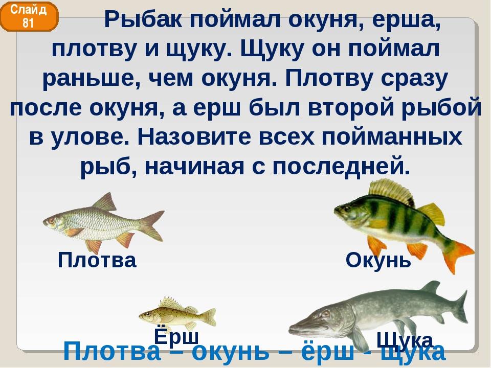Плотва – окунь – ёрш - щука Слайд 81 Рыбак поймал окуня, ерша, плотву и щуку....