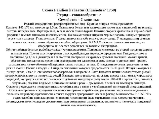 Скопа Pandion haliaetus (Linnaetus? 1758) Отряд – соколообразные Семейство -...