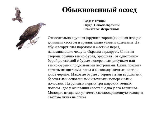 Обыкновенный осоед Раздел: Птицы Отряд: Соколообразные Семейство: Ястребиные...