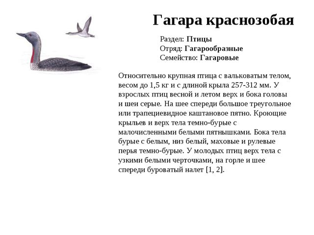 Гагара краснозобая Раздел: Птицы Отряд: Гагарообразные Семейство: Гагаровые О...