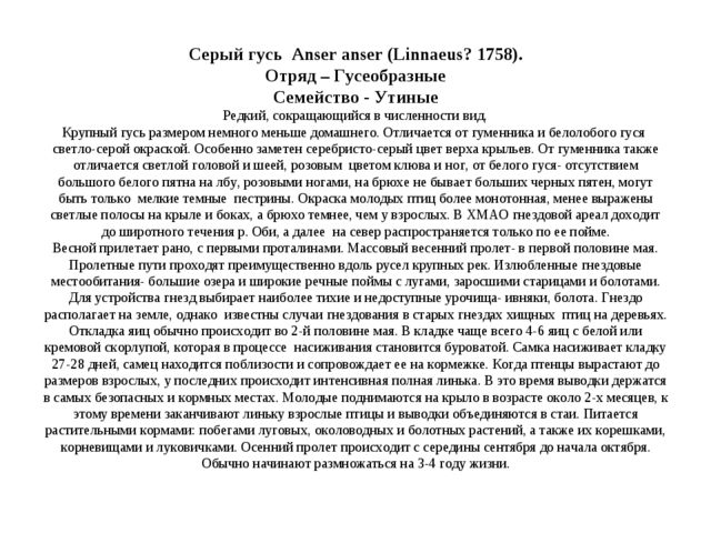 Серый гусь Anser anser (Linnaeus? 1758). Отряд – Гусеобразные Семейство - Ут...