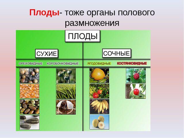 Плоды- тоже органы полового размножения