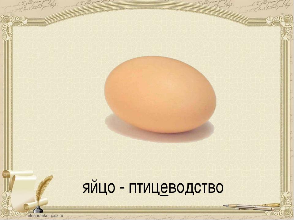 яйцо - птицеводство