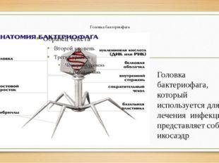 Головка бактериофага Головка бактериофага, который используется для лечения и