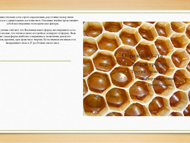 Построенные пчелами соты строго параллельны, расстояние между ними выдерживае...