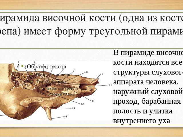Пирамида височной кости (одна из костей черепа) имеет форму треугольной пирам...