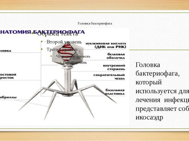 Головка бактериофага Головка бактериофага, который используется для лечения и...