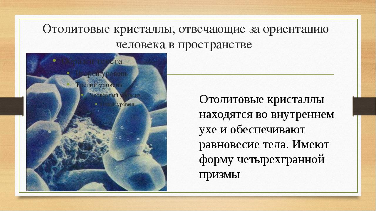 Отолитовые кристаллы, отвечающие за ориентацию человека в пространстве Отолит...