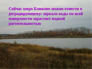 Сейчас озеро Ближнее можно отнести к деградирующему: зеркало воды по всей пов