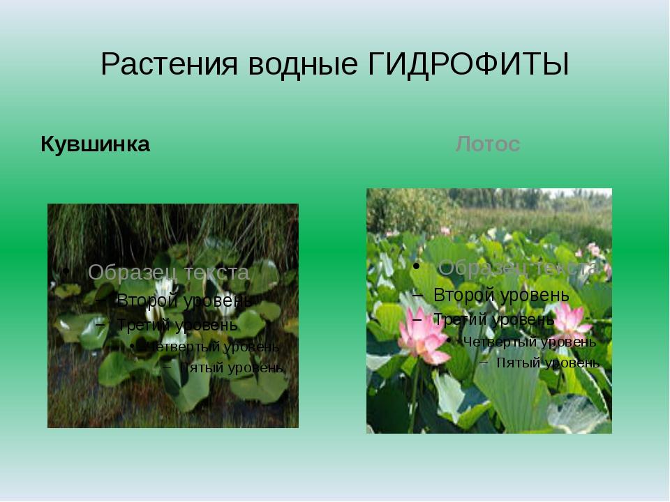 Растения водные ГИДРОФИТЫ Кувшинка Лотос