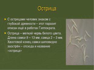 Острица С острицами человек знаком с глубокой древности – этот паразит описан