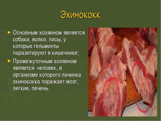Эхинококк Основным хозяином является собаки, волки, лисы, у которых гельминты...