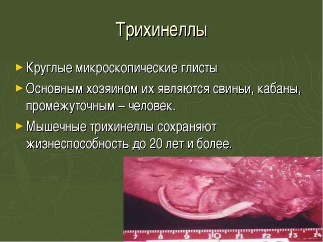 Трихинеллы Круглые микроскопические глисты Основным хозяином их являются свин...