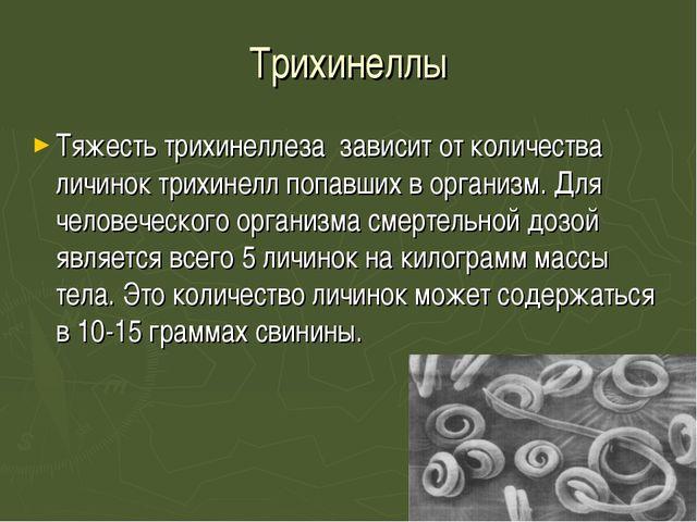 Трихинеллы Тяжесть трихинеллеза зависит от количества личинок трихинелл попа...