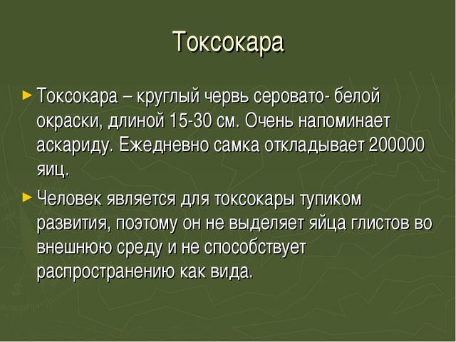 Токсокара Токсокара – круглый червь серовато- белой окраски, длиной 15-30 см....