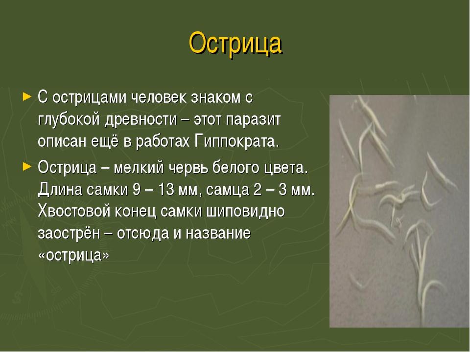 Острица С острицами человек знаком с глубокой древности – этот паразит описан...