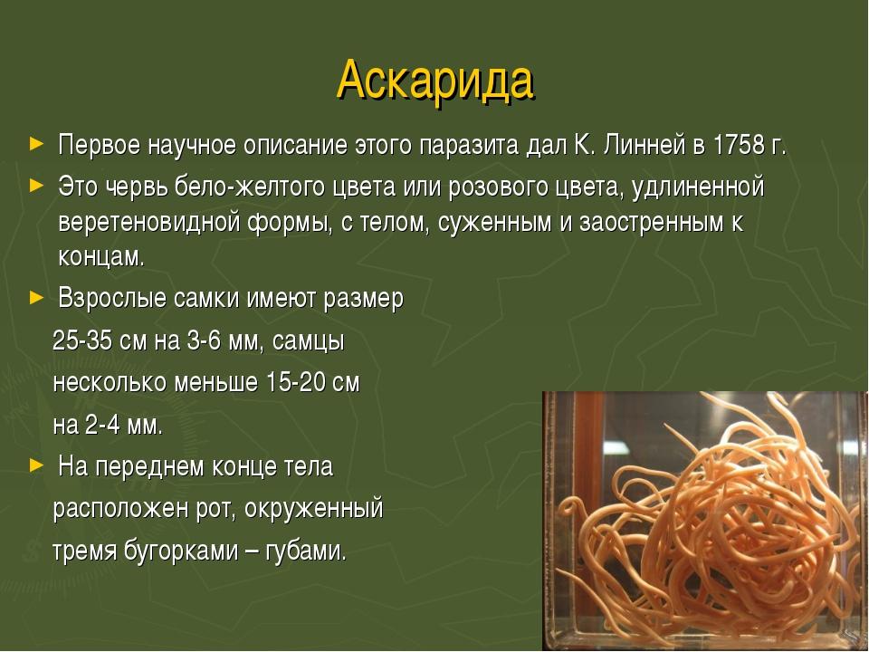 Аскарида Первое научное описание этого паразита дал К. Линней в 1758 г. Это ч...