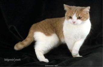 D:\АШЫК САБАК\Animals around the world\картинки\CAT011_net.jpg