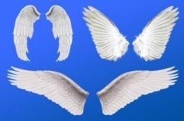 D:\АШЫК САБАК\Animals around the world\картинки\angel-wings.jpg