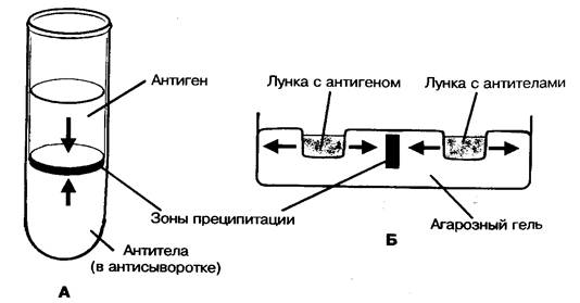 http://www.ssmu.ru/ofice/f4/micro/guide/Pictures/Immunology/image006_0001.jpg