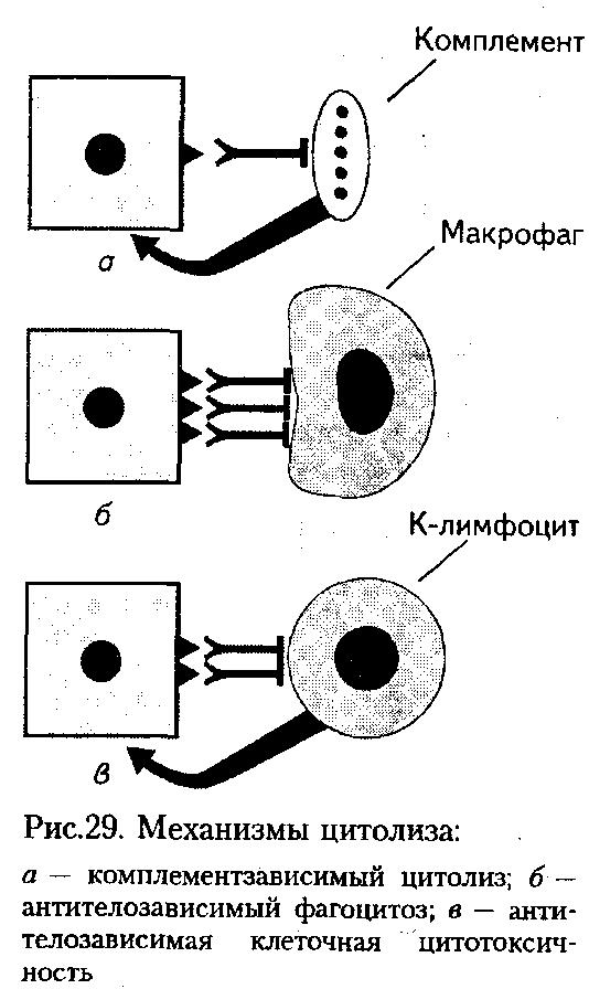 Преципитиноген