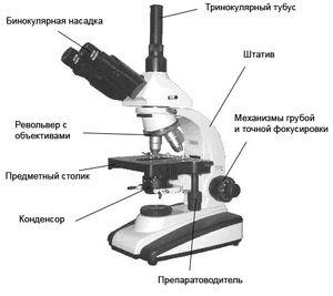 http://wikisport.ru/images/%D1%81%D1%82%D0%B0%D1%82%D1%8C%D0%B8/t6-1.jpg