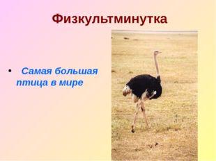 Физкультминутка Самая большая птица в мире