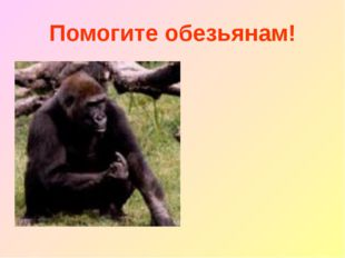 Помогите обезьянам!