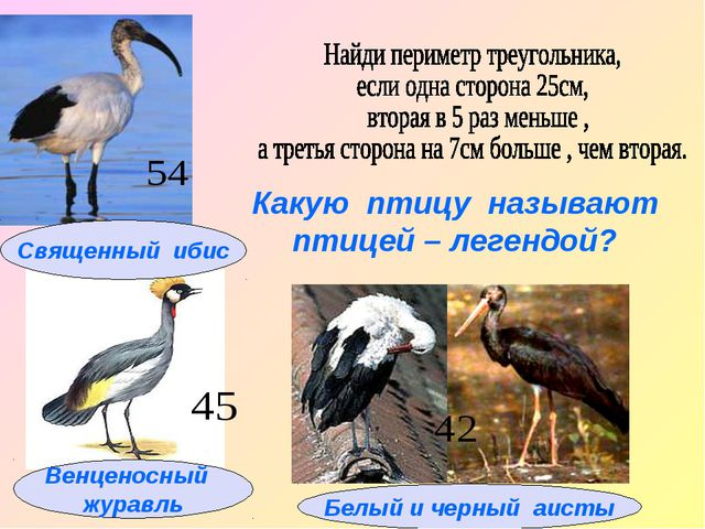Какую птицу называют птицей – легендой?