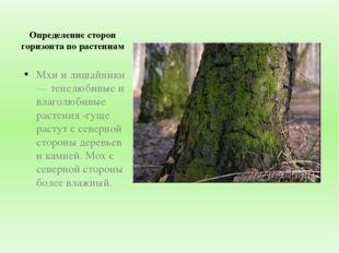 Определение сторон горизонта по растениям Мхи и лишайники — тенелюбивые и вла
