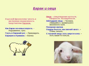 Баран и овца В русской фразеологии тупость и умственная ограниченность предст