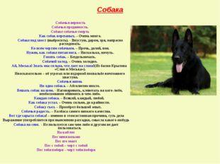 Собака Собачья верность Собачья преданность. Собаке собачья смерть Как собак