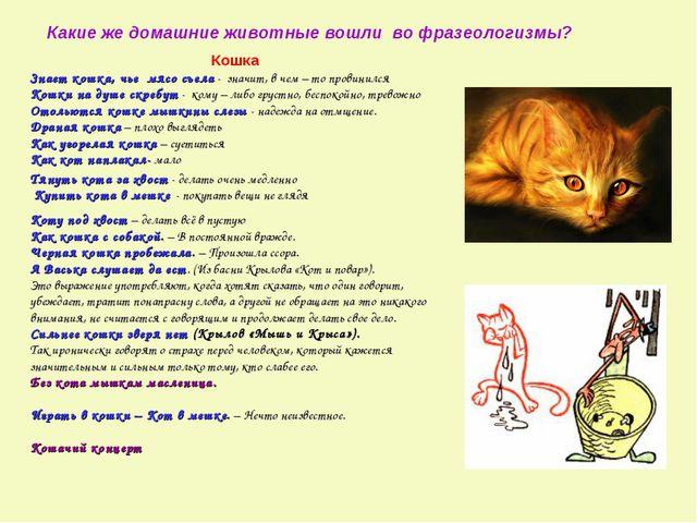 Какие же домашние животные вошли во фразеологизмы? Кошка Знает кошка, чье мяс...