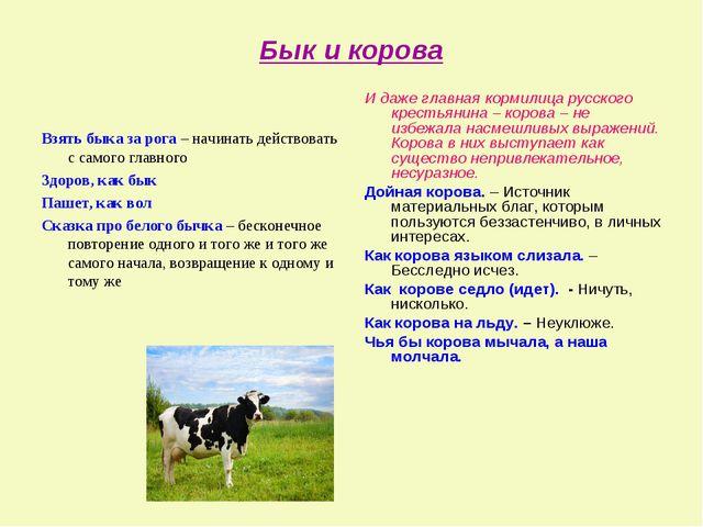 Бык и корова Взять быка за рога – начинать действовать с самого главного Здор...