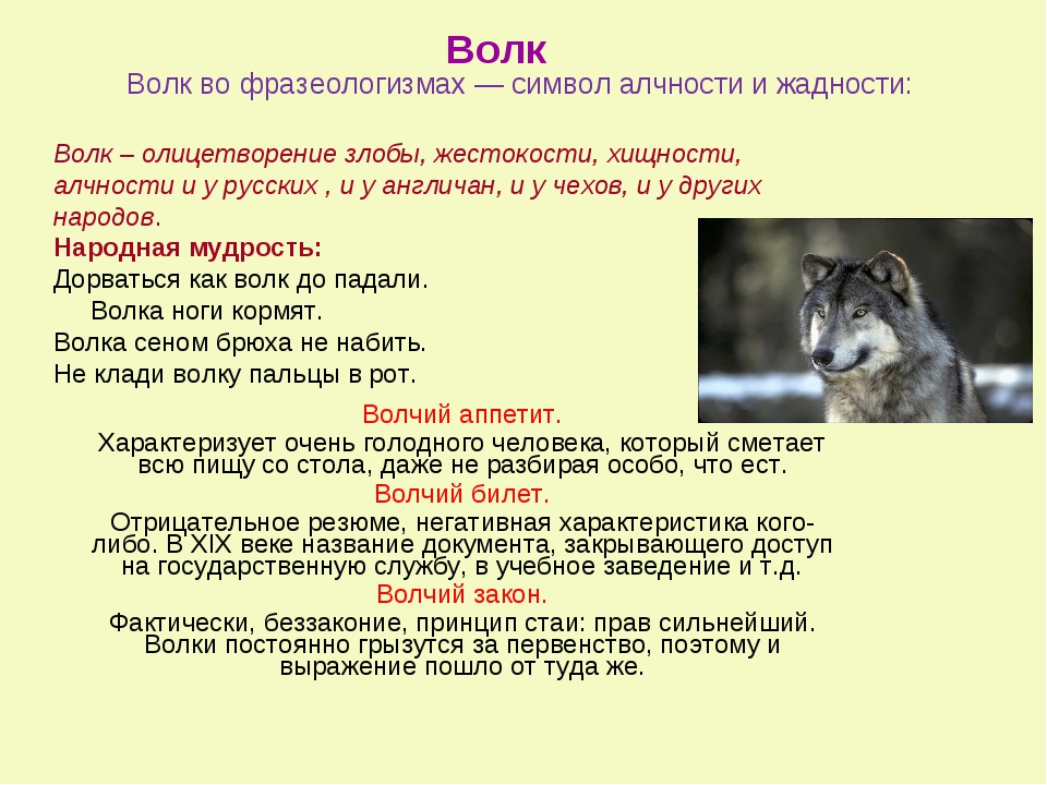 Волк во фразеологизмах — символ алчности и жадности: Волчий аппетит. Характер...