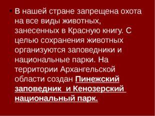 В нашей стране запрещена охота на все виды животных, занесенных в Красную кн