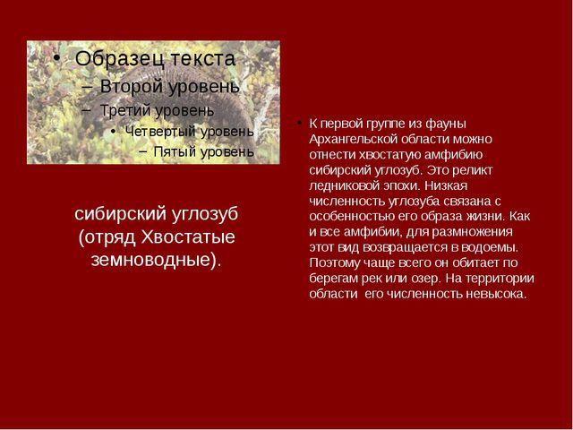 сибирский углозуб (отряд Хвостатые земноводные). К первой группе из фауны Арх...