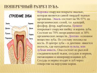 Коронка снаружи покрыта эмалью, которая является самой твердой тканью организ
