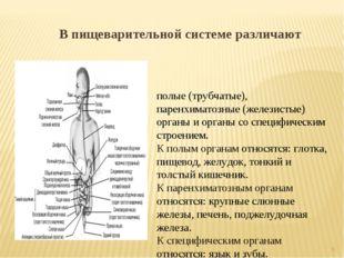 В пищеварительной системе различают полые (трубчатые), паренхиматозные (желез