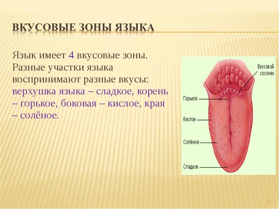 Язык имеет 4 вкусовые зоны. Разные участки языка воспринимают разные вкусы: в...