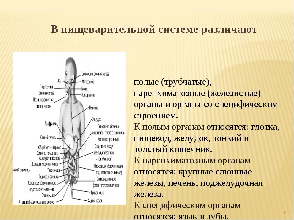 В пищеварительной системе различают полые (трубчатые), паренхиматозные (желез...