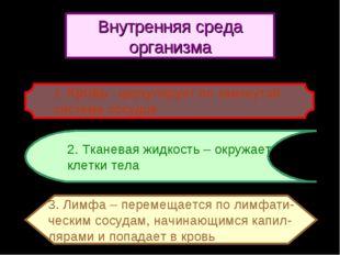 2. Тканевая жидкость – окружает клетки тела 3. Лимфа – перемещается по лимфат