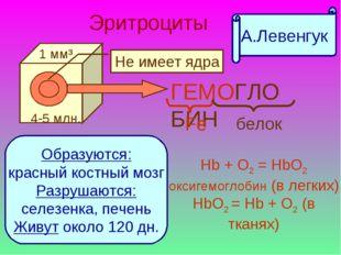 Эритроциты ГЕМОГЛОБИН Fe белок Образуются: красный костный мозг Разрушаются: